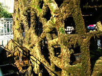 Moss covered water wheel at L'Isle sur la Sorgue
